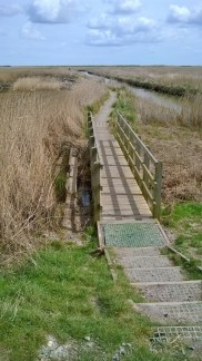 Boardwalk through reeds