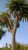 Clacton pier palm trees