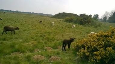 Sutton Hoo burial mound 2