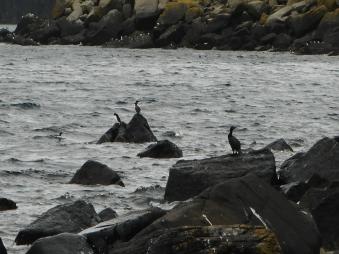 Shiant Isles