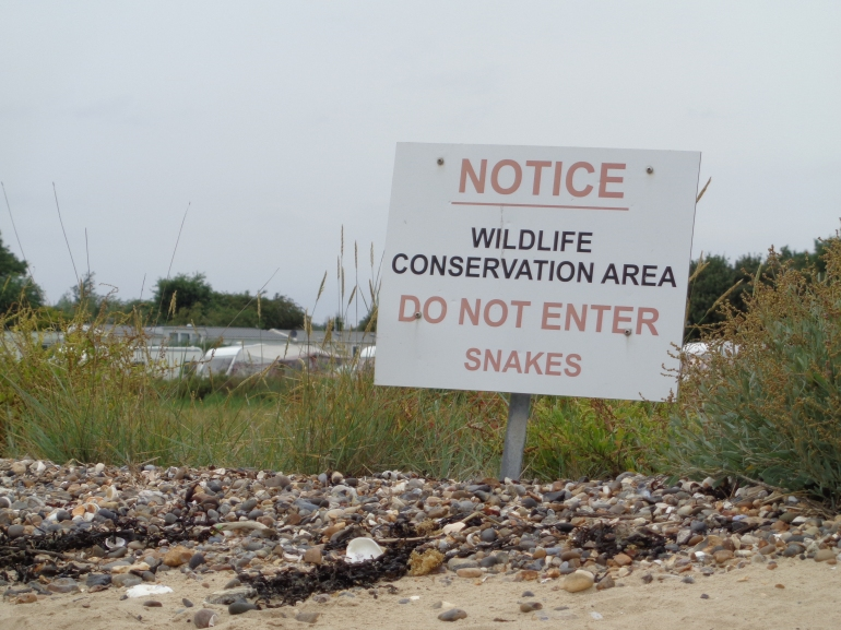 Mersea Island, snake conservation sign
