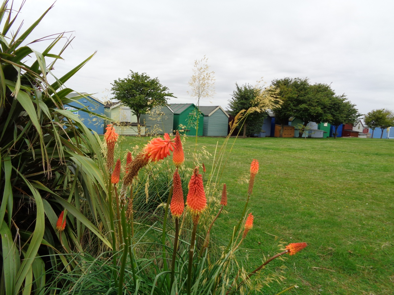 Mersea Island, red hot pokers and beach huts