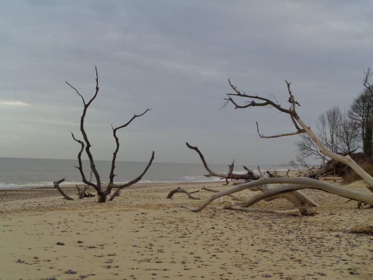 Benacre, trees on beach